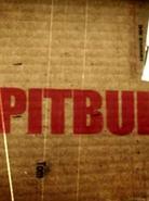 PitBull (serial)