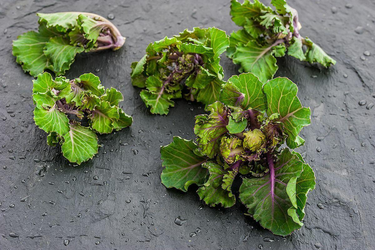 Kalerosse – nowe warzywo w twojej kuchni
