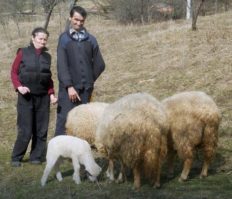 Najviše žale što umire selo: Petra i Momčilo nastvaljaju porodičnu tradiciju i gaje ovce za ponos