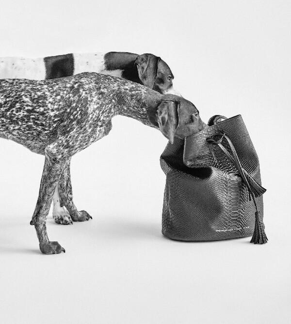 Psy w kampanii torebek Zofii Chylak