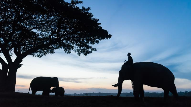 Elefánt falu Thaiföldön / Fotó: NORTHFOTO