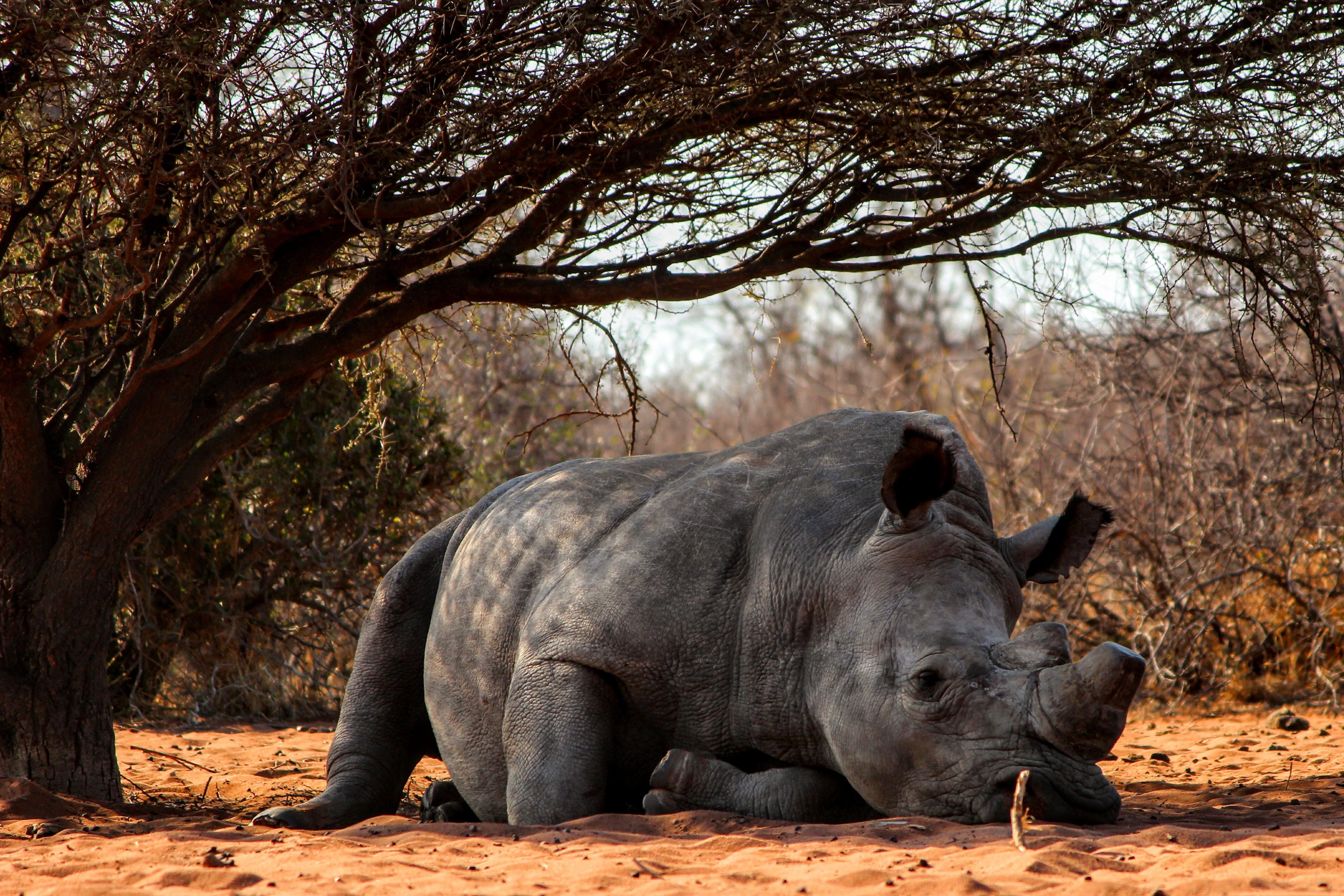 15 állat, akik több ideig terhesek, mint az emberek   nlc