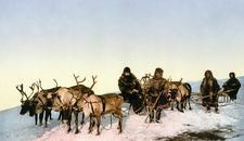 UZBUNA U SIBIRU Ljudi se razboleli, a životinje uginule zbog antraksa iz smrznutog irvasa