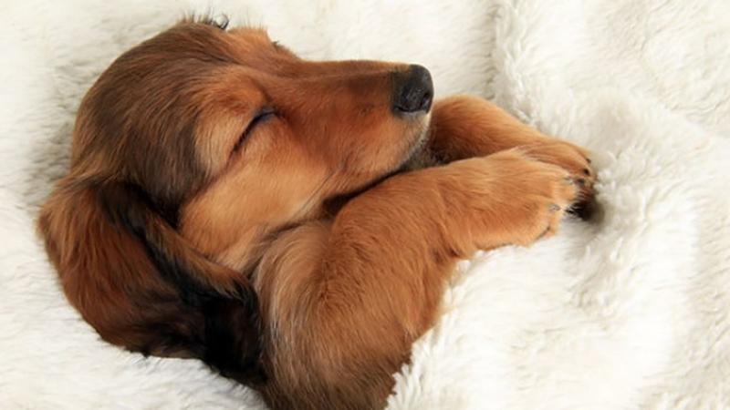 Ágyban alvó kutyák /brightside.me