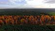 Polskie lasy z lotu ptaka