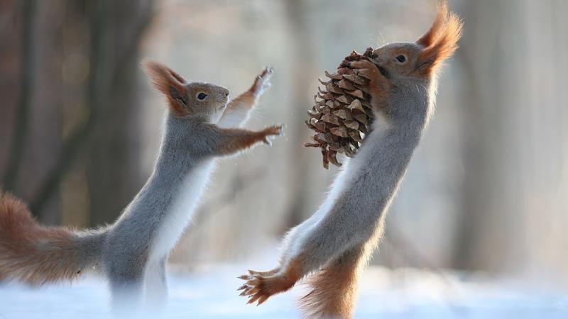 Tündéri tobozzal játszó mókusok /Fotó: Profimedia-Reddot