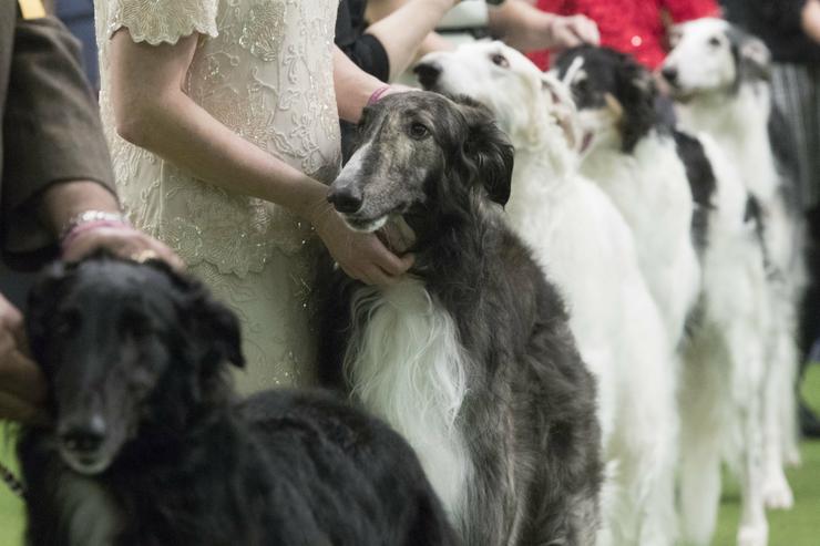 Gazdáik mellett várakoznak az ebek/ Fotó: MTI