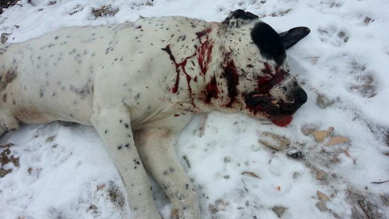 A kutya gazdájával sétált, - igaz, póráz nélkül - amikor a vadász lelőtte. A fegyveres szerint rátámadt az eb