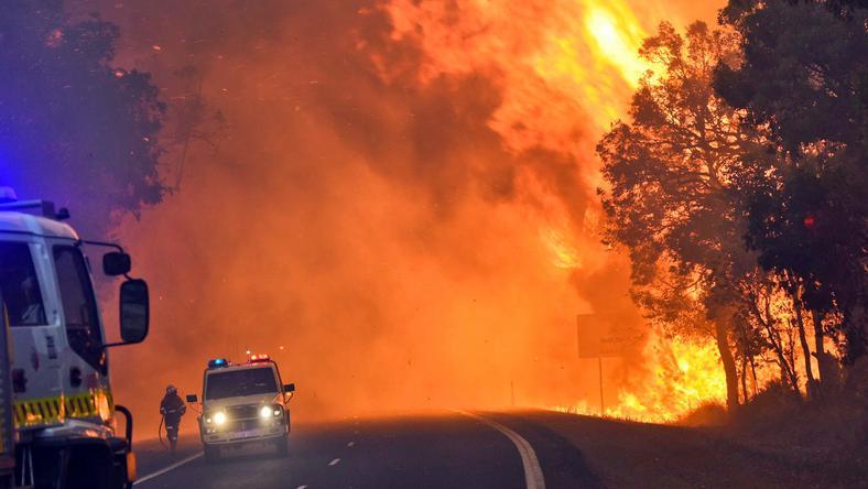 Ausztráliában egyre nagyobb pusztítást végez a bozóttűz / Fotó: AFP