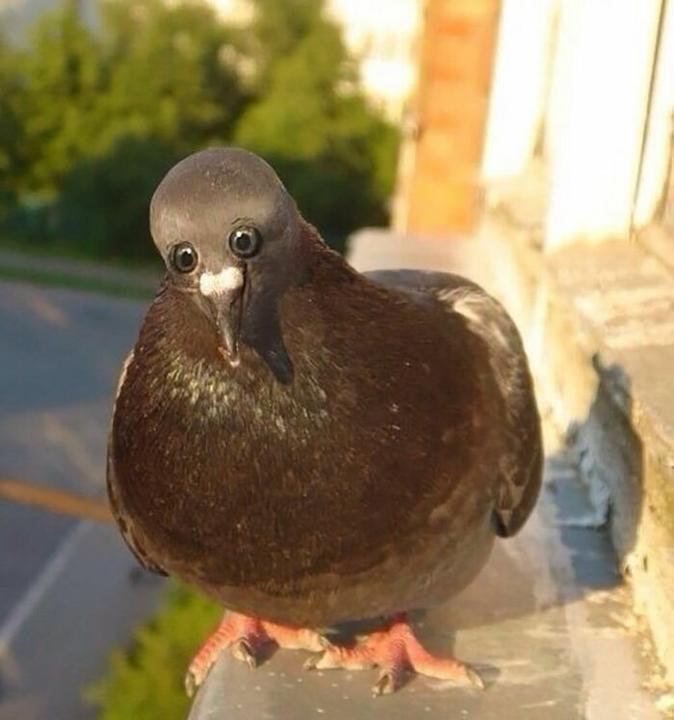 A galambokról nem is beszélve / Fotó: boredpanda.com