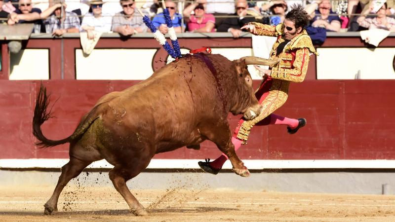 Ismét egy bikaviadal, ahol a matador járt pórul - Fotó: MTI