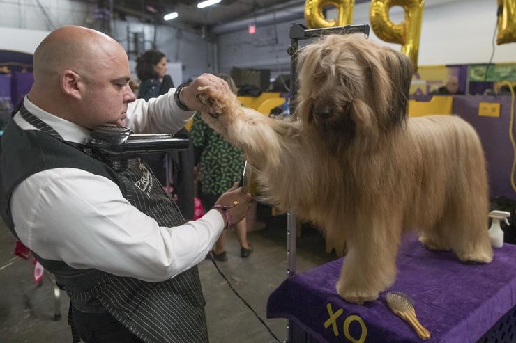 A kiállításon egy kutyaszépségverseny is volt / Fotó: MTI