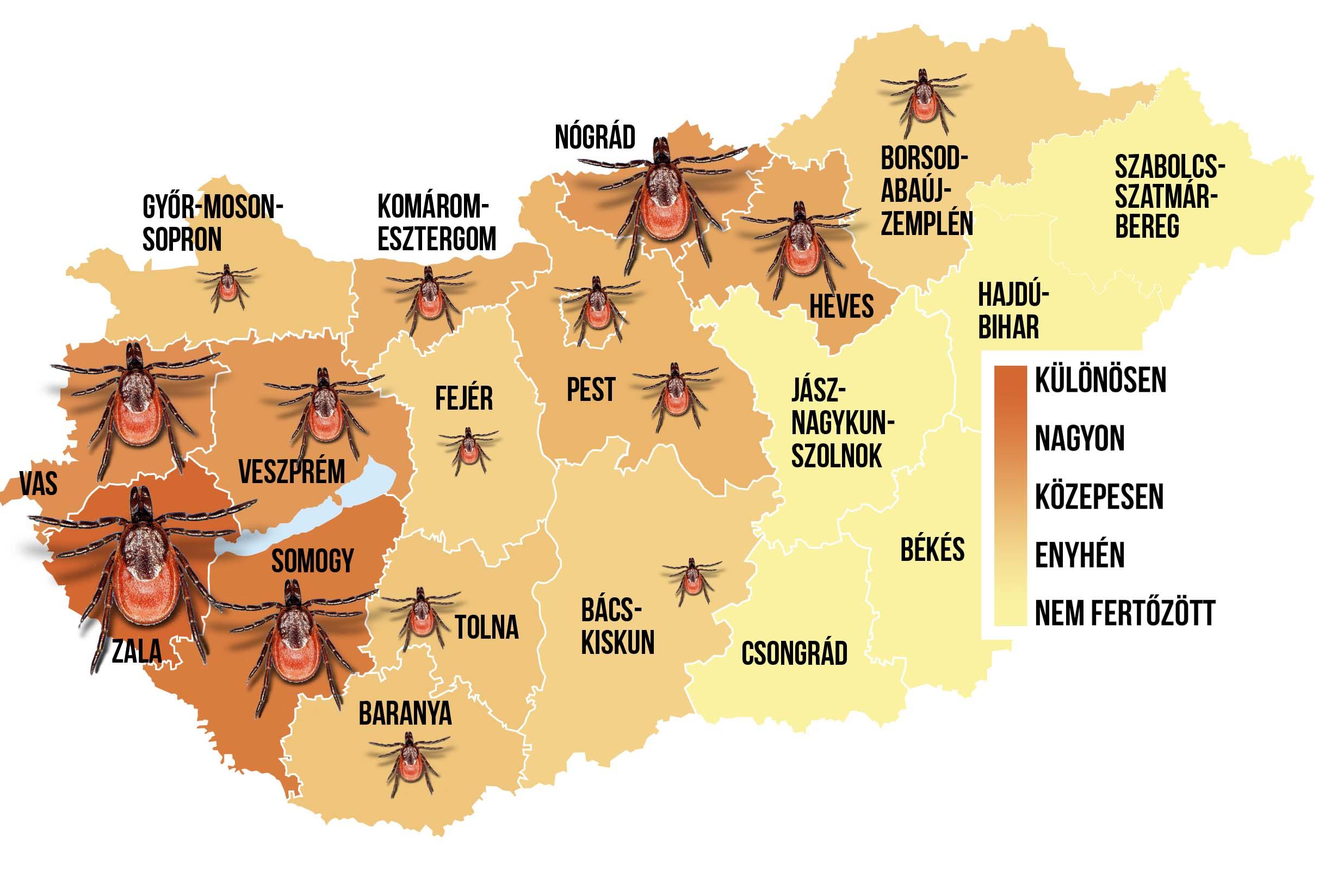 kullancs térkép magyarország 2014 Támadnak a fertőző kullancsok – Térképen mutatjuk, hol a  kullancs térkép magyarország 2014