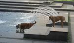 I NJIMA JE VRUĆE Kad se psi lutalice okupaju u centru grada