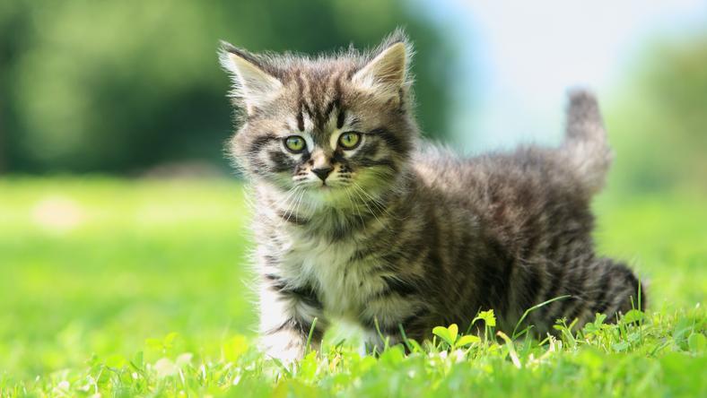 Cuki cica, édes kutyus? Küldje el nekünk! /Fotó: Northfoto