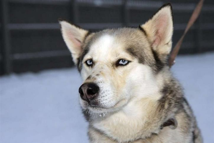 Chcą kary dla zabójców psa husky! Niech siedzą!