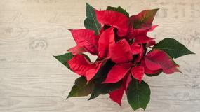 Ozdoby świąteczne i ich wpływ na nasze zdrowie