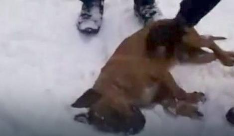 Pas koji je izgubio bitku