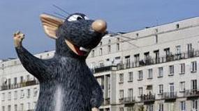 Szczur gigant w Warszawie