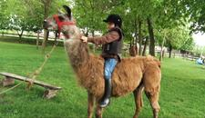 Ovako izgleda život jednog kozaka: Pripitomio je lamu, noja i svinje na imanju nedaleko od Beograda!