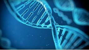Usunięcie starzejących się komórek może wydłużyć nasze życie