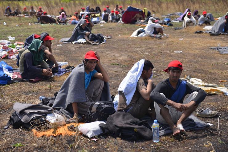 A menekültek a magyar tranzitzóna közelében várakoznak, hogy bejuthassanak az országba/ Fotó: MTI-Molnár Edvárd
