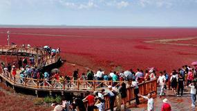 Zachwycająca Czerwona Plażaw chińskim Panjin