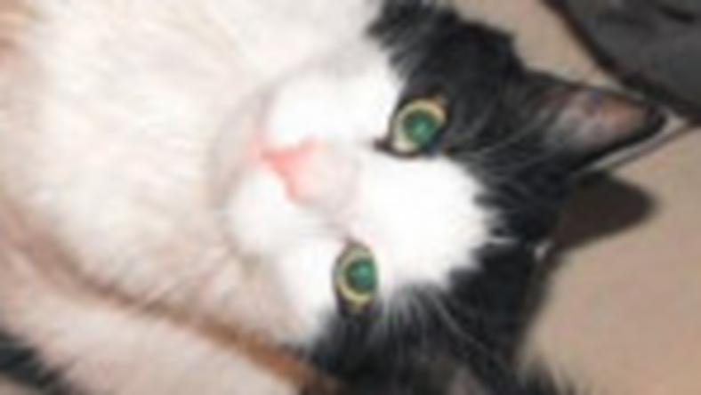 Mindenkire szokott így nézni a cicája, főleg, ha éppen a konyhában csinálunk valamit
