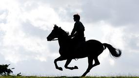 """""""Czas wojny"""": koń, który poszedł na wojnę"""