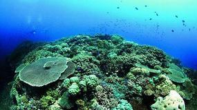 Papua Nowa Gwinea - podwodny świat