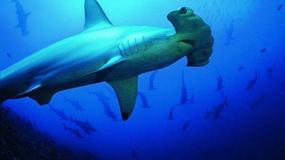 Ekwador - podwodny świat Wysp Galapagos