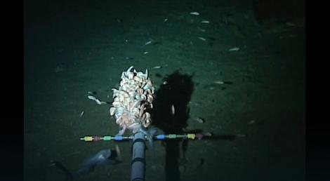 Neobična riba može da se vidi u donjem levom uglu snimka