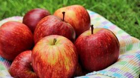 Jabłka: kiedy leczą, kiedy szkodzą - tłumaczy dietetyk