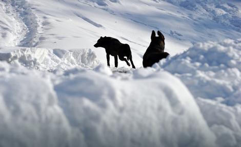 Psi trče po snegu u Ukrajini