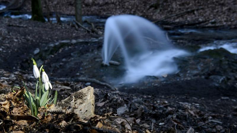 Időszakos karsztforrások a Bükkben - Fotó: MTI Komka Péter