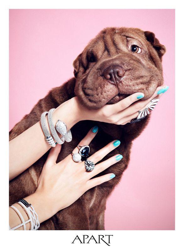 Urocze psy w kampanii Apart