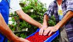 Ministarstvo: Zakon o radu štiti sezonske radnike