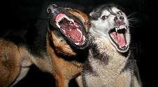 Wścieklizna – jest się czego bać