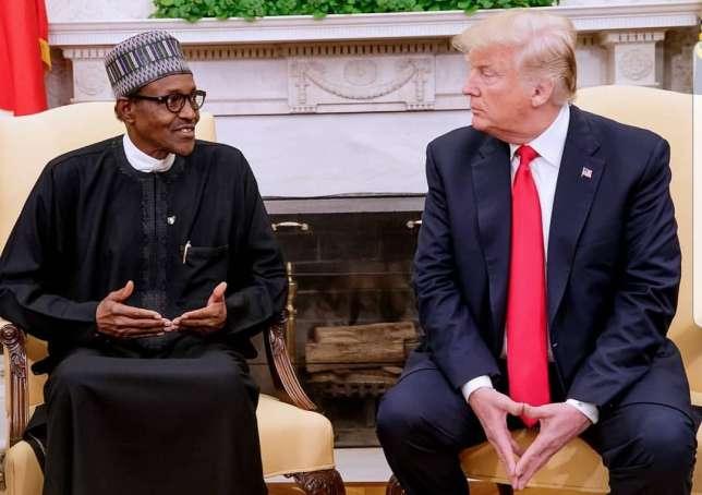 President Buhari and President Trump (AllAfrica)