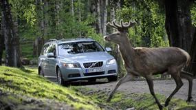 Volvo ostrzeże przed zwierzętami na drodze