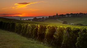 Alzacja: wino, pejzaże i spokój