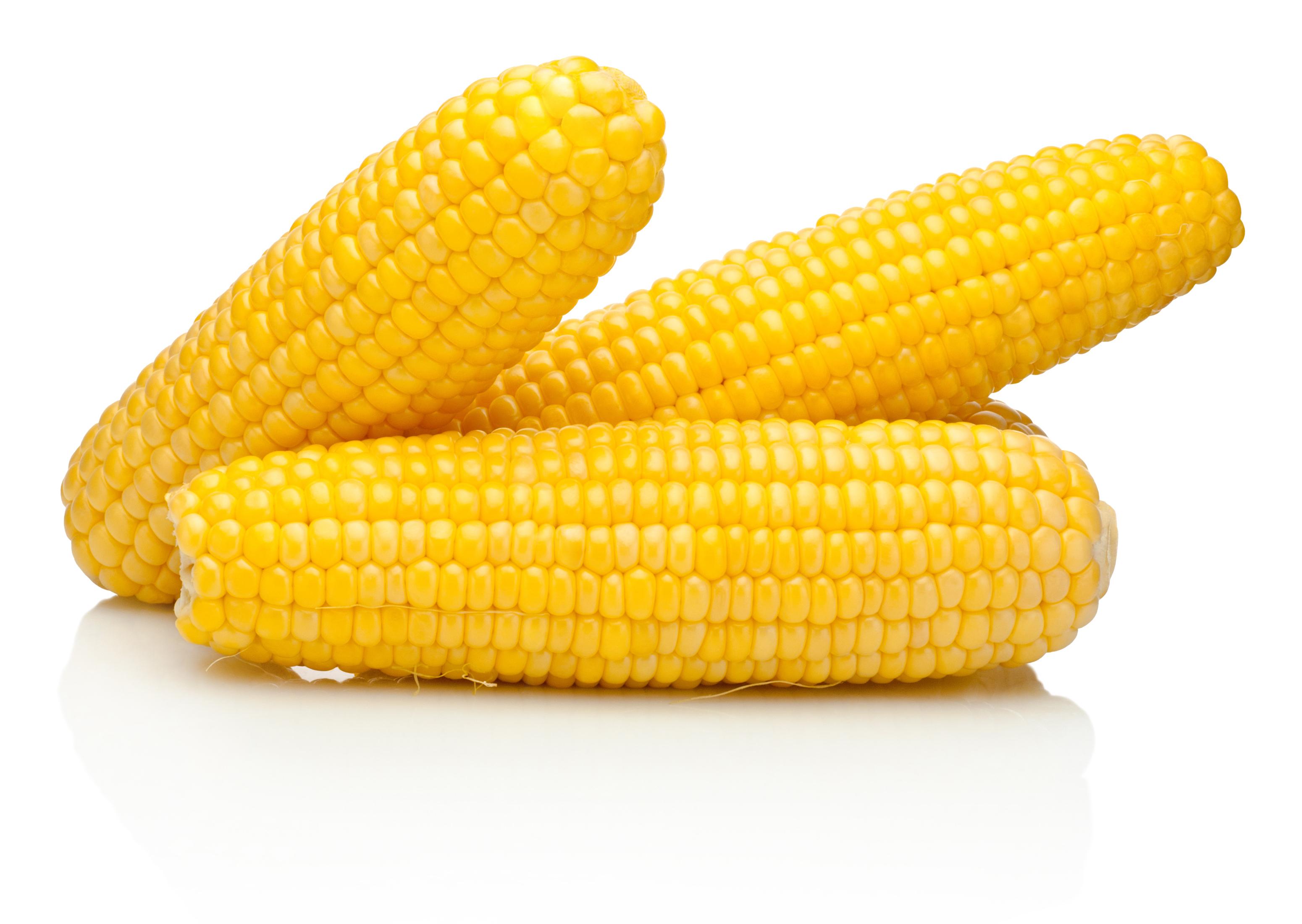 Kukorica étrend fogynia - A búza német fogy vagy fogynia