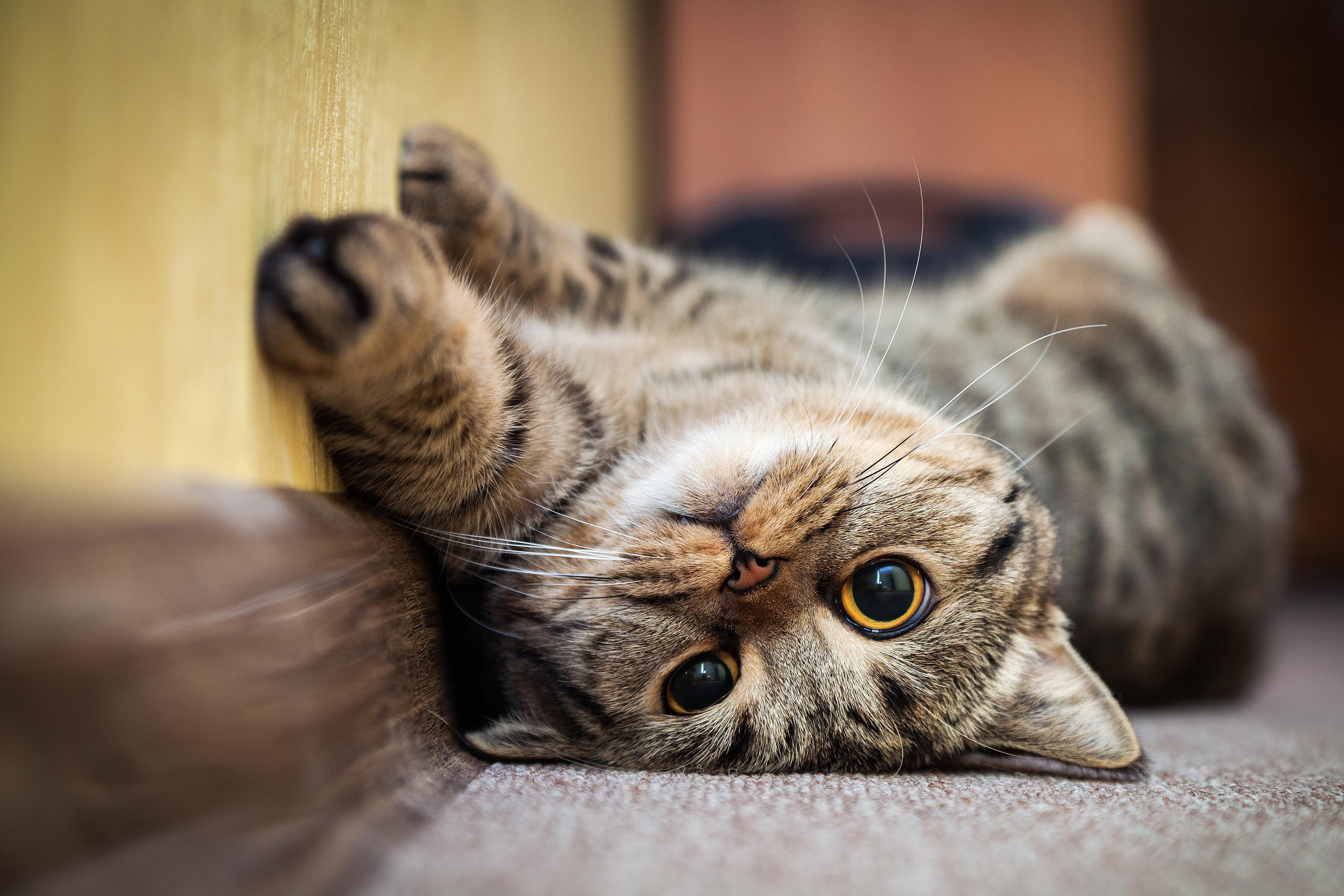 Ezért fogadjunk örökbe macskát