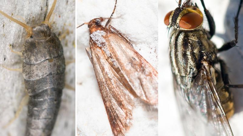 Jak pozbyć się domowych insektów: much, mrówek, moli, rybików