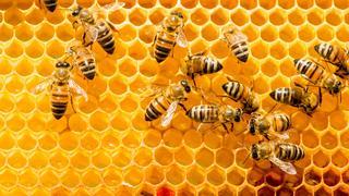 Pszczeli superfoods