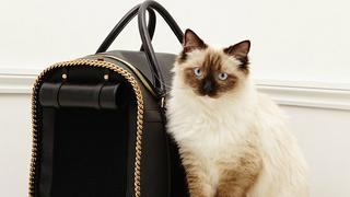 Przeurocze  koty promują kolekcję akcesoriów Stelli McCartney