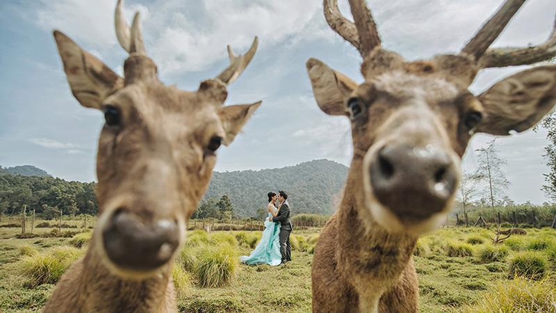 Mókás esküvői fotók / Fotó: Profimedia-reddot
