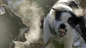 Maraton psich zaprzęgów w Alpach