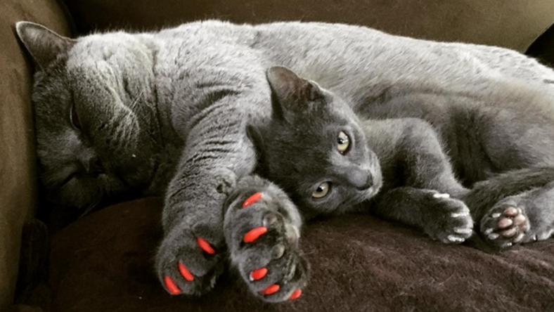 Új trendnek számít a macskakarom befestése/ Fotó: Instagram/amazinraisin
