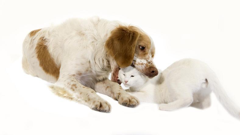 Akkor most kutyát, vagy macskát vegyünk? / Fotó: Northfoto